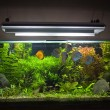 bigstock_Planted_Tropical_Freshwater_Aq_4667572